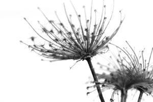 Seed head_Flipped