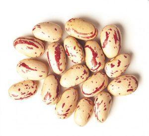 Cranberry_beans_3
